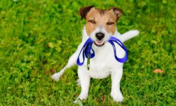 mejor-correa-para-perro