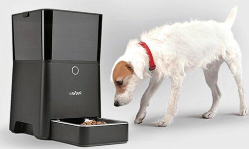 mejor-dispensador-automático-de-alimento-para-perros