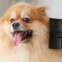los-mejores-cepillos-para-perros