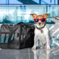 -transportín-para-perros